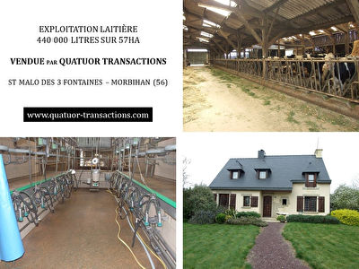 SOLD IN 2018. MORBIHAN. Dairy farm 440 000 litres on 57 hectares