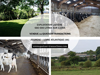 SOLD IN 2018. LOIRE ATLANTIQUE. Dairy farm 680,000 litres on 110 hectares grouped