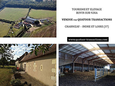 SOLD IN 2017. INDRE ET LOIRE. Tourism and beef farm very grouped on 92 hectares
