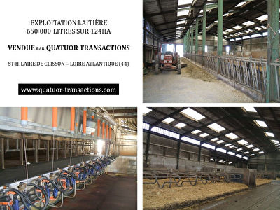 SOLD IN 2019. LOIRE ATLANTIQUE. Dairy farm 650,000 litres on 124 hectares