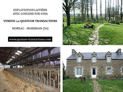 CENTRAL MORBIHAN. Grouped dairy farm with stone house