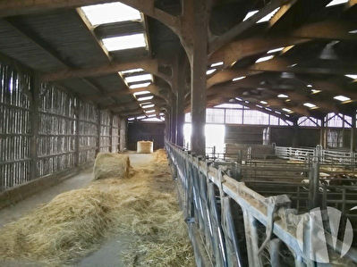 LOIRE ATLANTIQUE. Organic mixed dairy and beef farm on 116 hectares