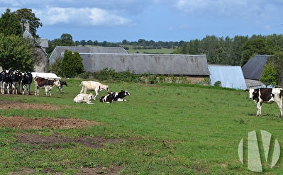 CENTRAL MANCHE. Dairy farm on 85 hectares in one plot