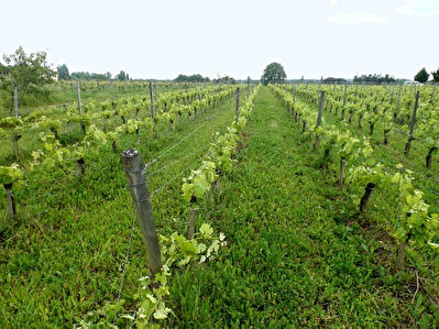 GIRONDE : In the Medoc area, wine property of 13.91 hectares of vines