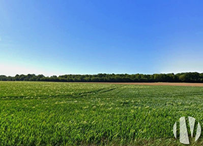 INDRE ET LOIRE. Crops on 102 hectares