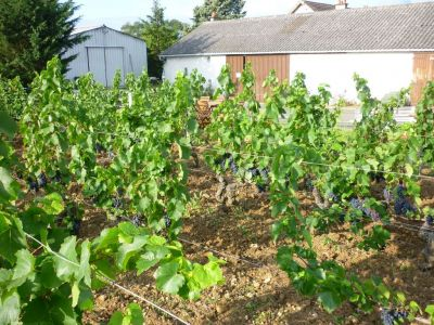 SOLD IN 2014 - INDRE ET LOIRE : organic wine property on 6 ha