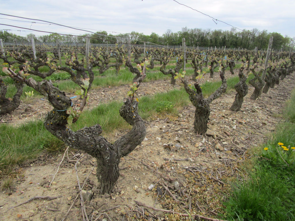 INDRE-ET-LOIRE : Vouvray 17 hectares, bel outil.