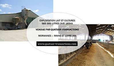 SOLD IN 2018. MAINE ET LOIRE. Tillage and dairy farm on 185 hectares