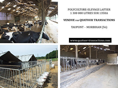 SOLD IN 2018. MORBIHAN. Dairy farm over 1 million litres